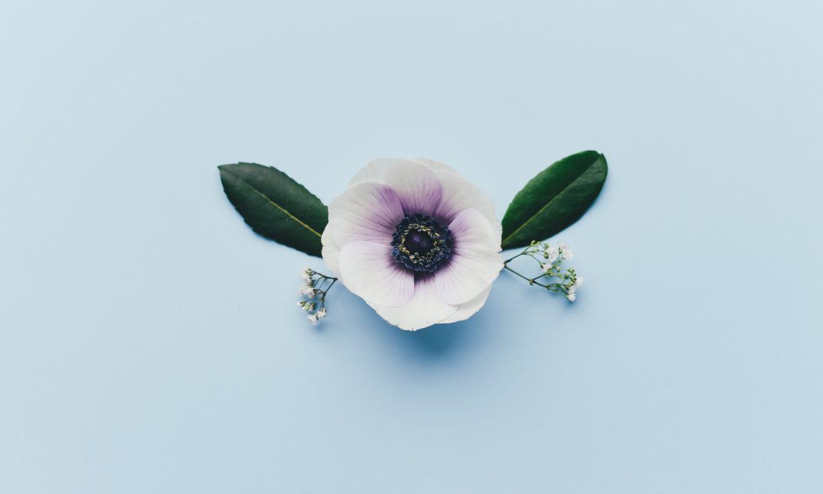 Anemone Bouquet & Centerpiece Ideas