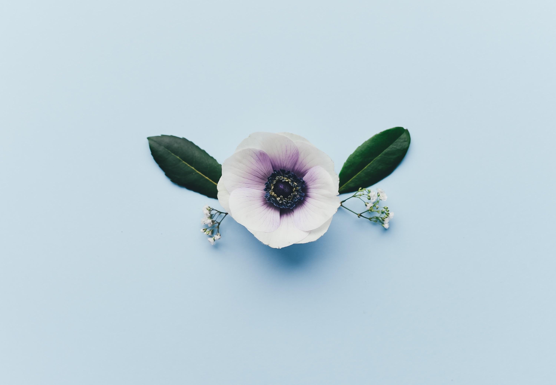 Anemone Bouquet Centerpiece Ideas Mywedding