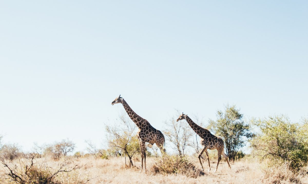 Kruger National Park Destination Weddings