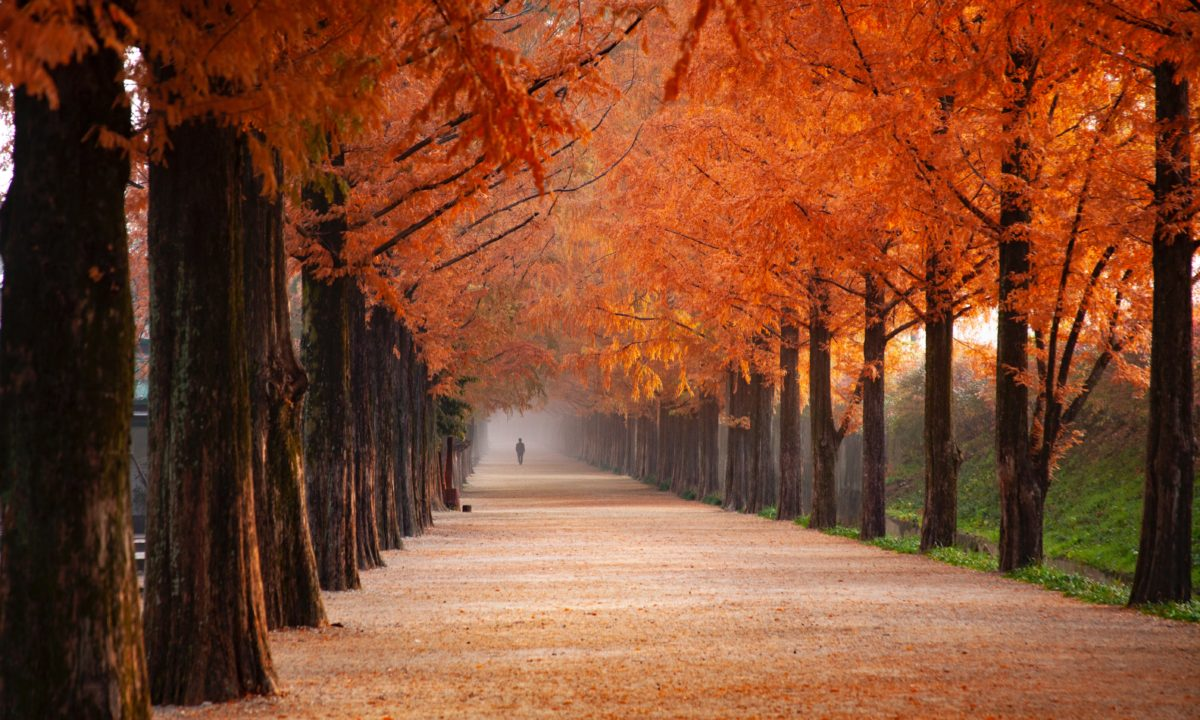 5 Fall Foliage Honeymoon Destinations