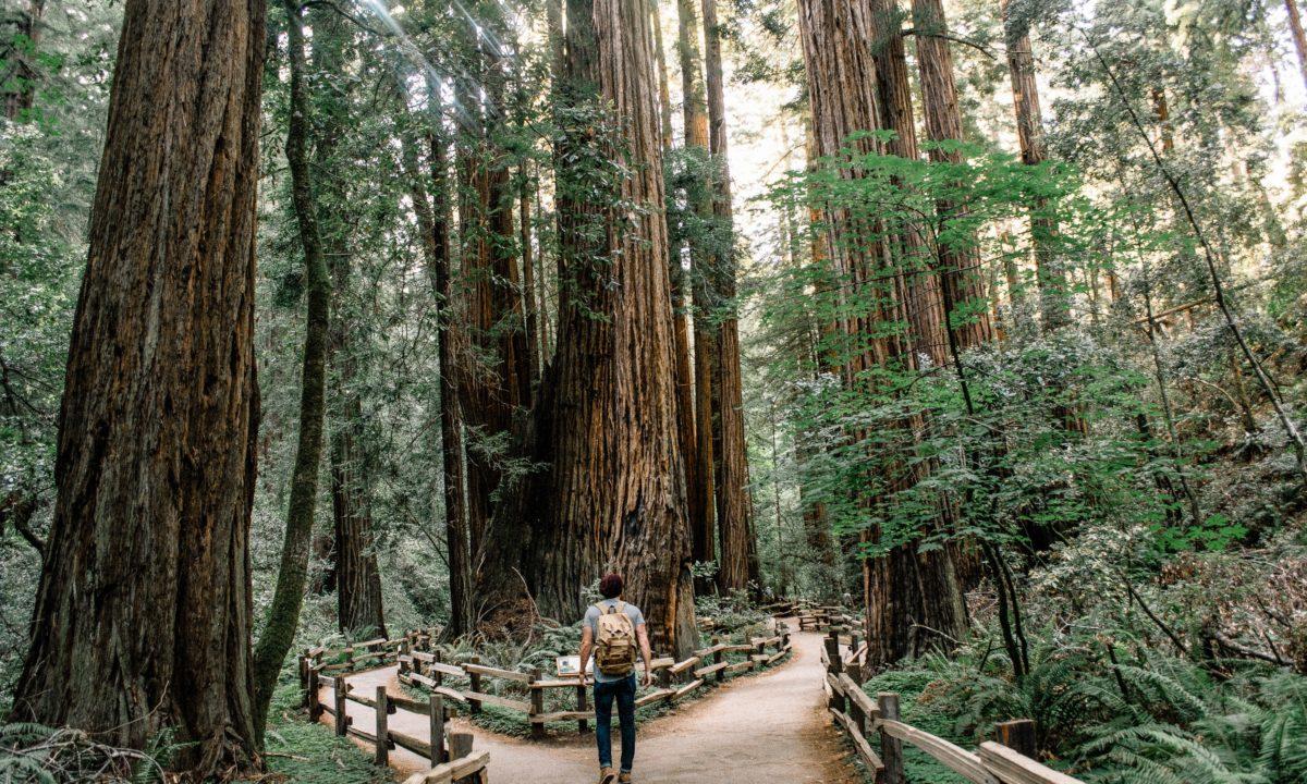 California Honeymoon Road Trip: Where to Stop