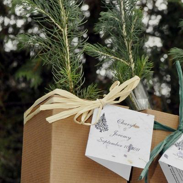 Tree Seedling Boxed Favors