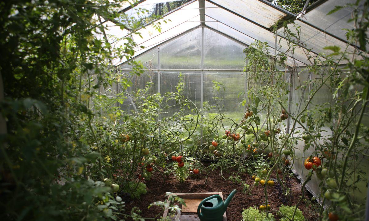 Wedding Registry Ideas for Your Garden
