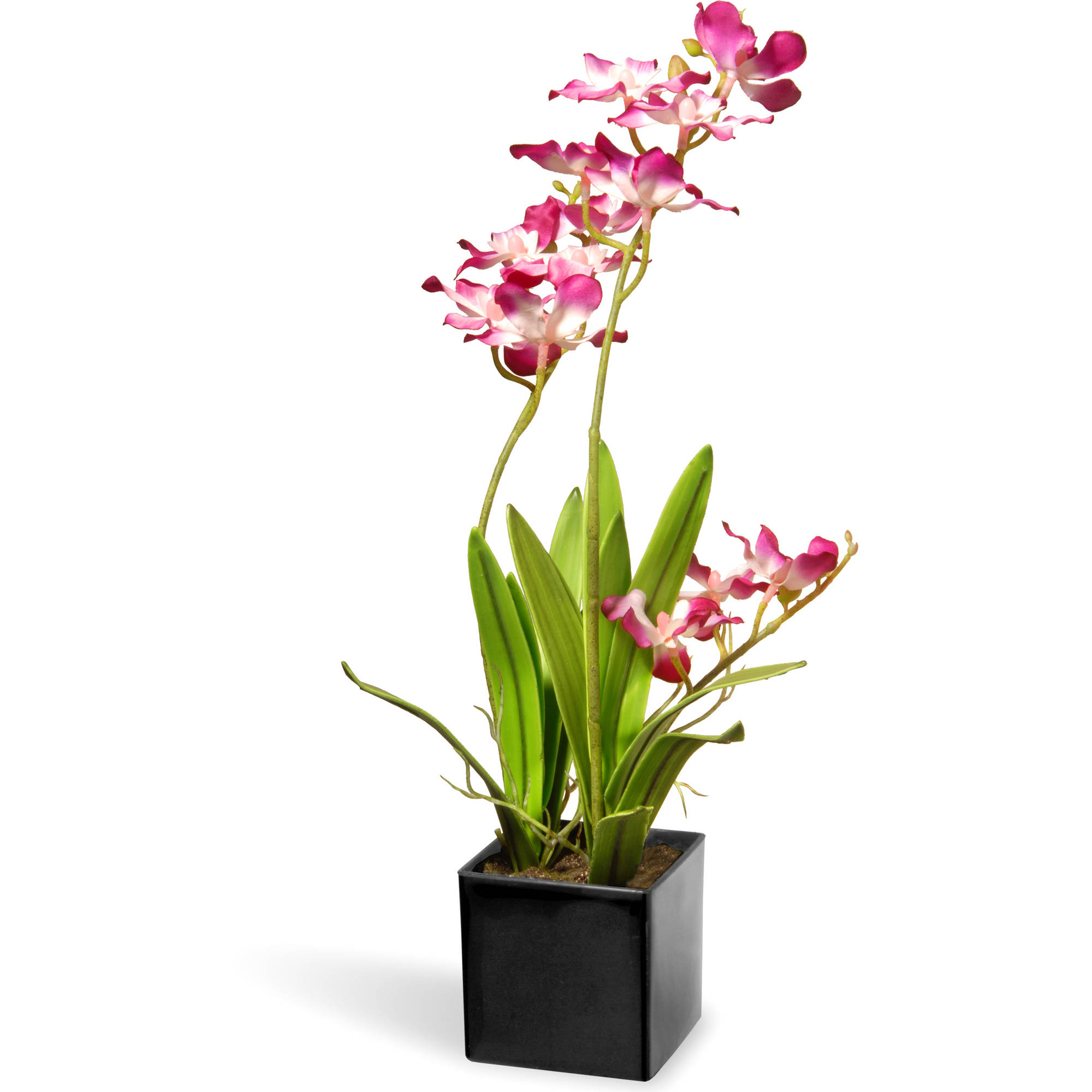 16-inch Purple Orchid Plant