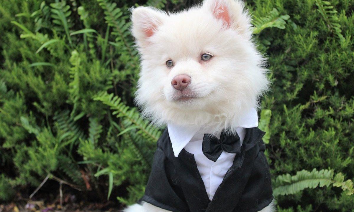 Best Pet Attire for a Wedding