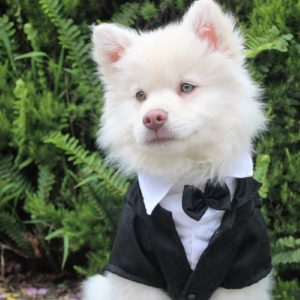 Best Pet Attire for a Wedding