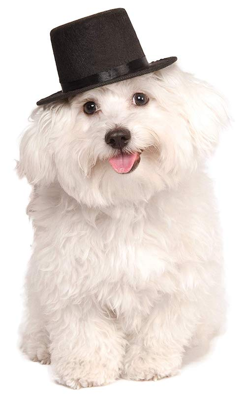 Rubie's Costume Company Top Hat for Your Pet