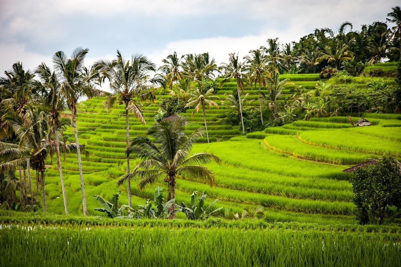 7 Incredible Bali Honeymoon Activities
